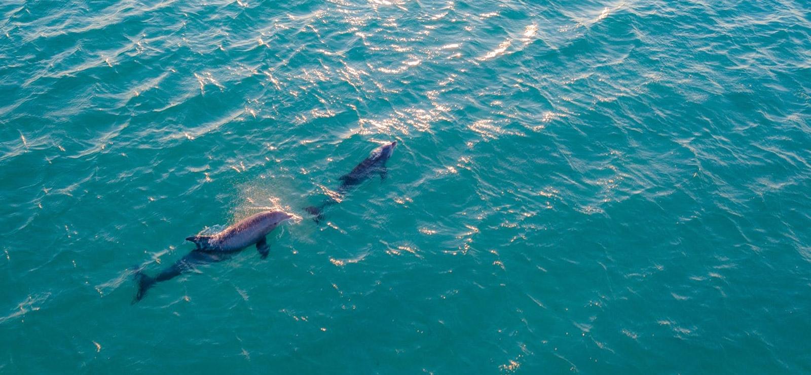 activite nage avec les dauphins a saint-raphael