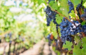 winetour en provence