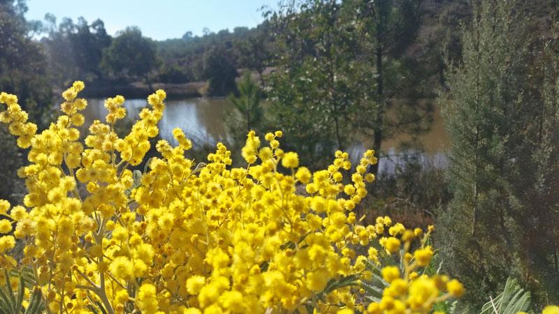 blog mimosa - lac peguieres