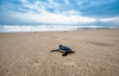 turtle-fréjus