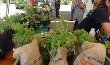Suspendu - Echange de plants, boutures et graines