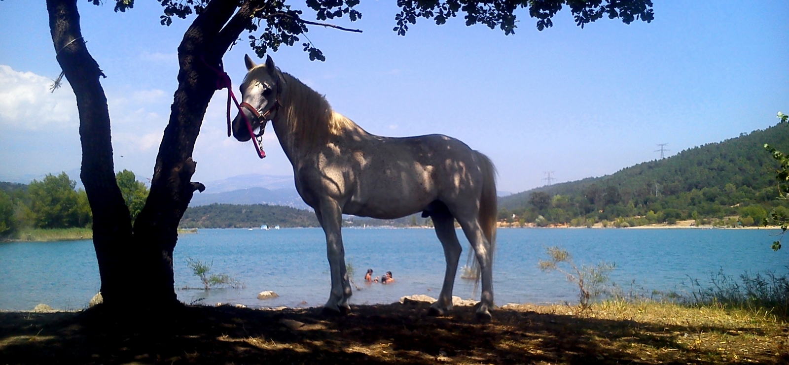 Au bord du lac de St Cassien