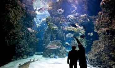 Du rocher au musée océanographique