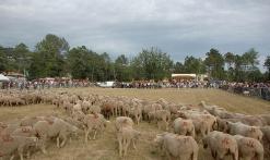 le troupeau de la barrière