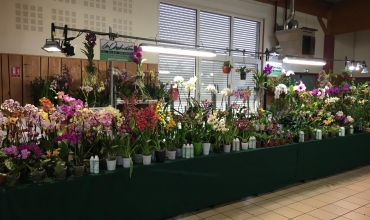 Orchidées Vacherot