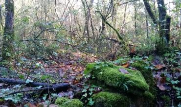 Sentier du vallon de Vauloube
