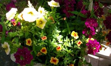 journée d'échange de plants