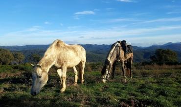 chevaux avec vue sur l'Estérel