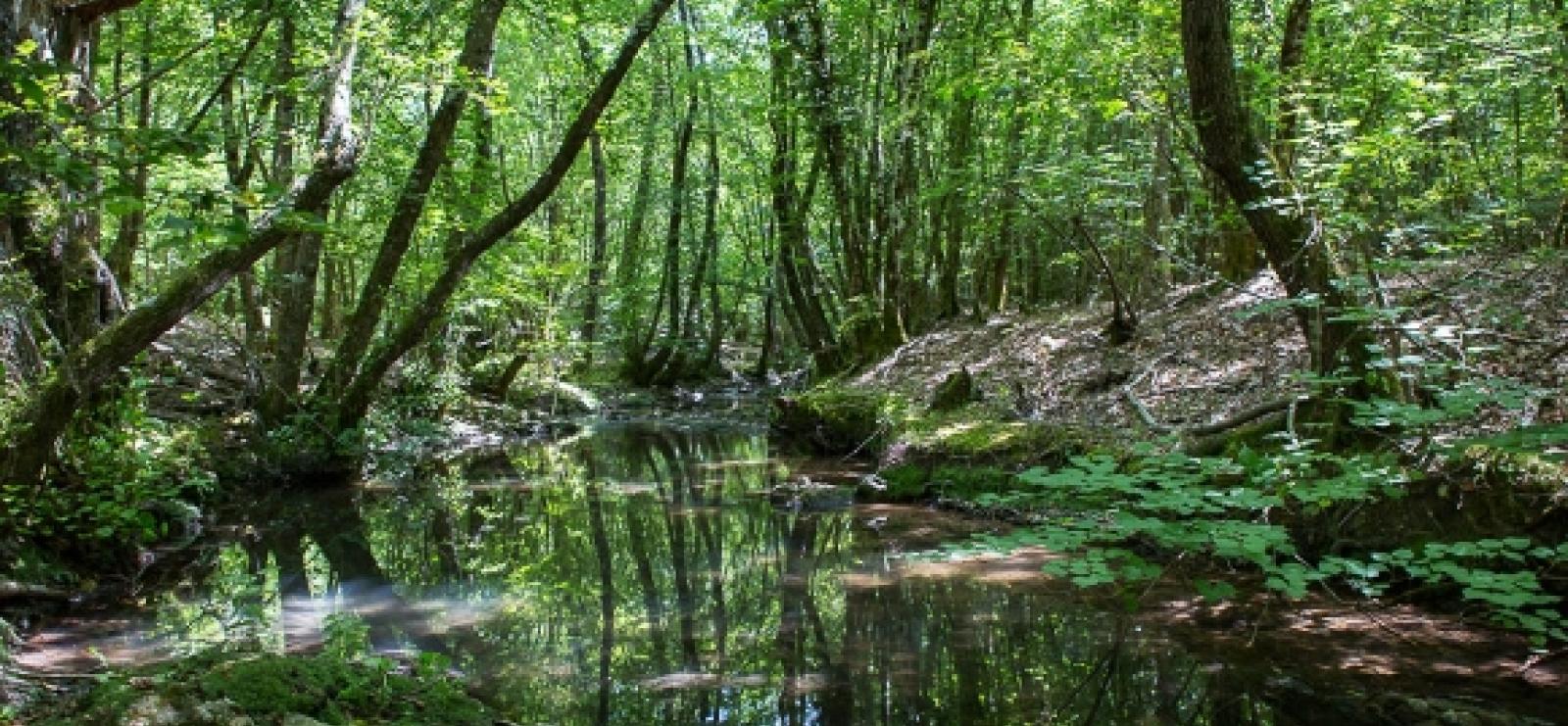 Saint Paul en Forêt