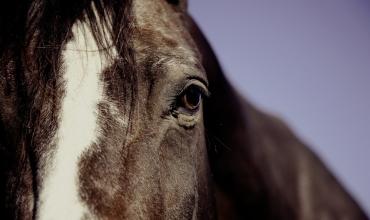 La Combe Equitation