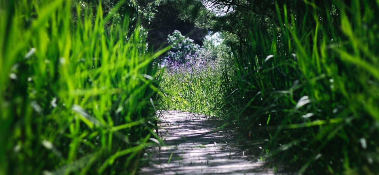 Groupes-Mer- nature-promenade-botanique