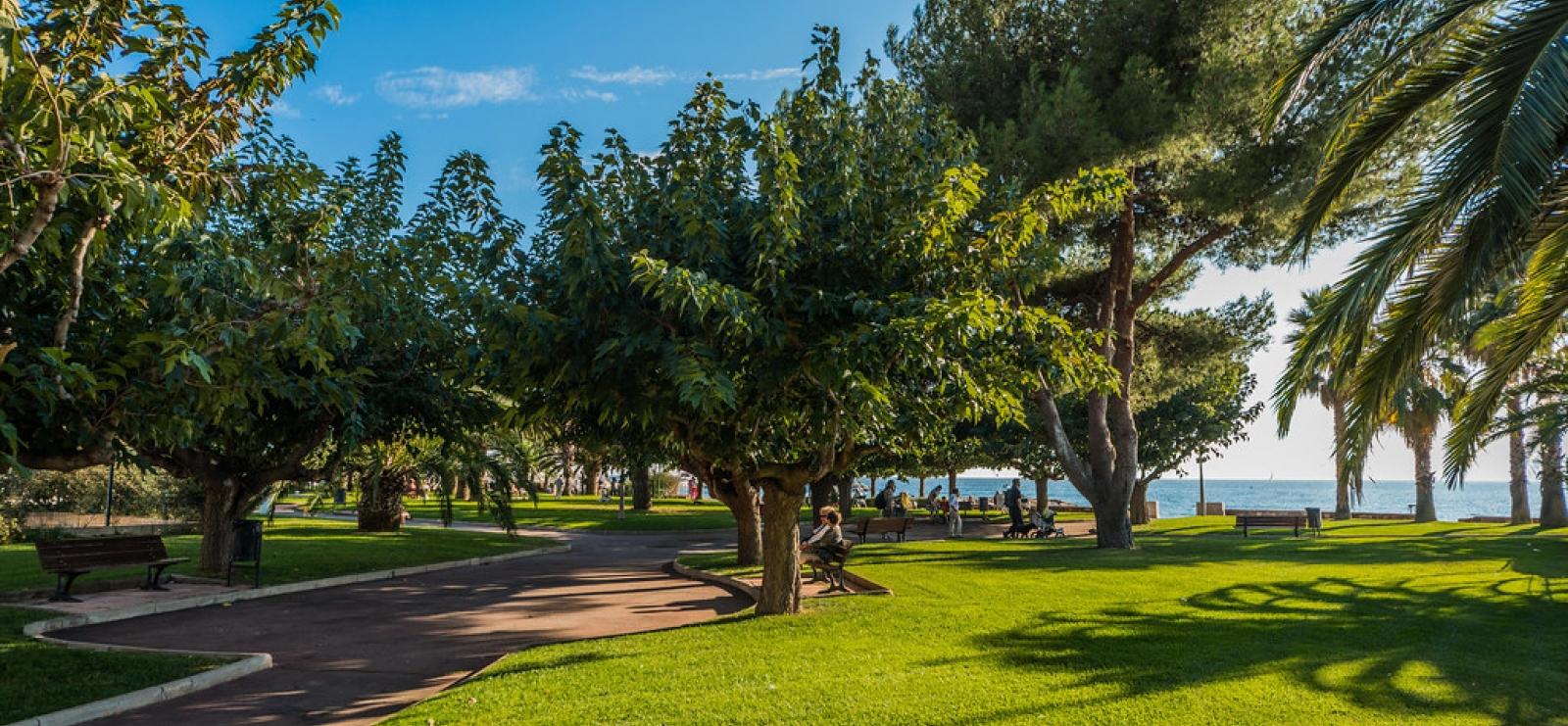 Les plus beaux arbres de Saint-Raphaël, symboles et spirtitualité