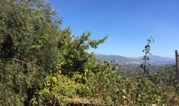 Séjour Mimosa: Gîte La Bastide des Trois Pins