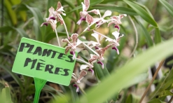 Les Orchidées Vacherot