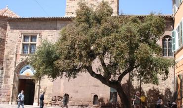 Visite guidée 'Fréjus, 2000 ans d'histoire'