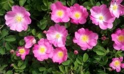 Découverte sensorielle des plantes aromatiques et à parfum