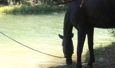 Balade à cheval: Haras des Villards