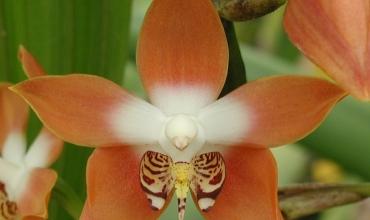 Les secrets des orchidées