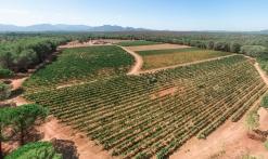 Domaine de Marchandise récolte raisins drone