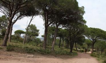 Forêt Palayson