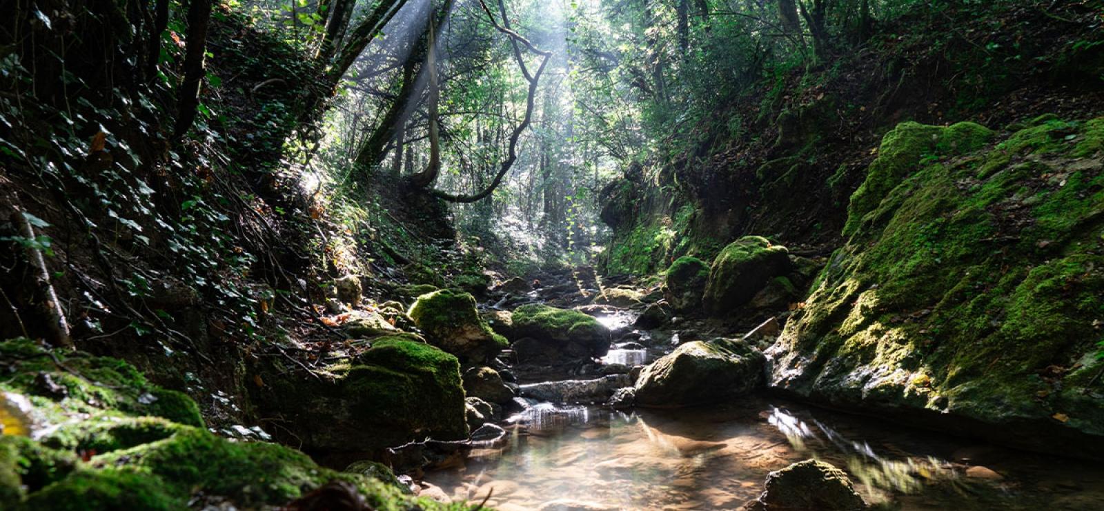 Randonnée : Cascade de Gourbachin