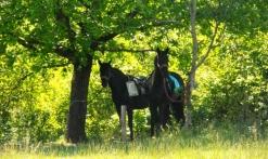 Balade à cheval 'Le champ des Oliviers'