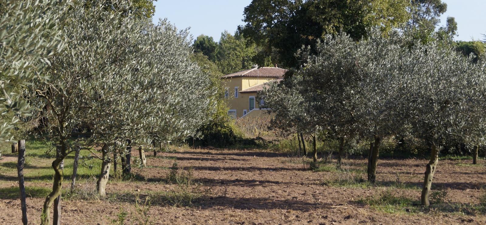 Domaine Oléicole Diouloufet
