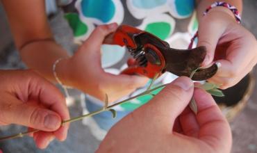 Atelier bouturage d'olivier