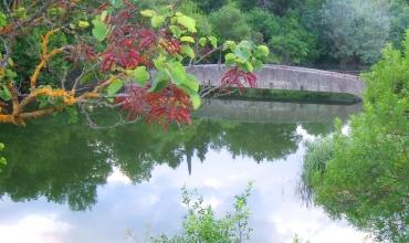 pont sur le biotope