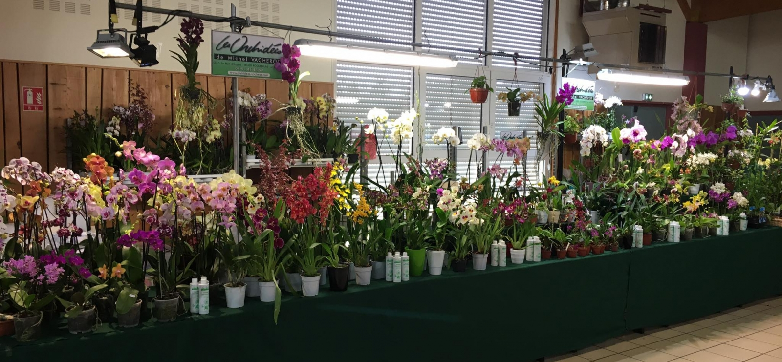 Le monde magique des orchidées