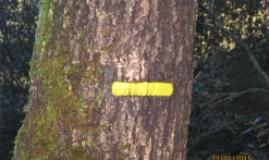 Randonnée : Les Crêtes de Tanneron- PR16