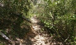 Montauroux - Trail Naturatrail