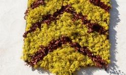 Annulée- Fête du Mimosa- Tanneron