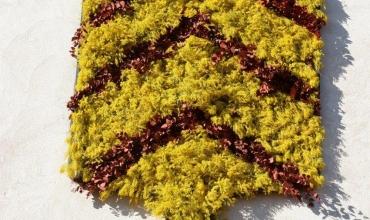 Fête du Mimosa- Tanneron
