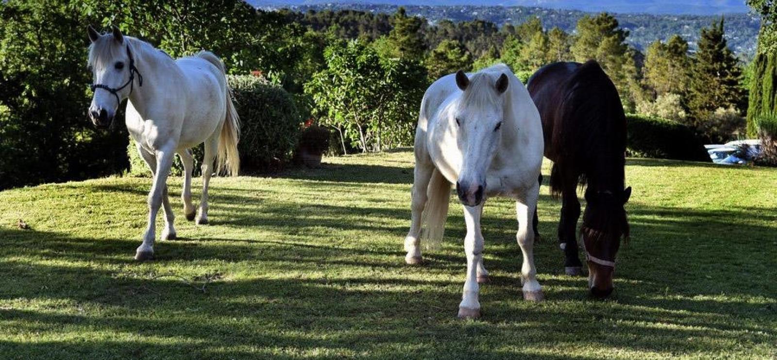 chevaux en pature