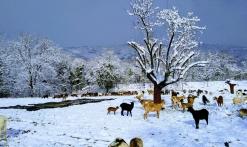 Sous la neige La Ferme des Cairns