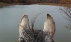 cheval regardant le lac de St Cassien