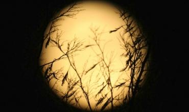 lune selon Dominique