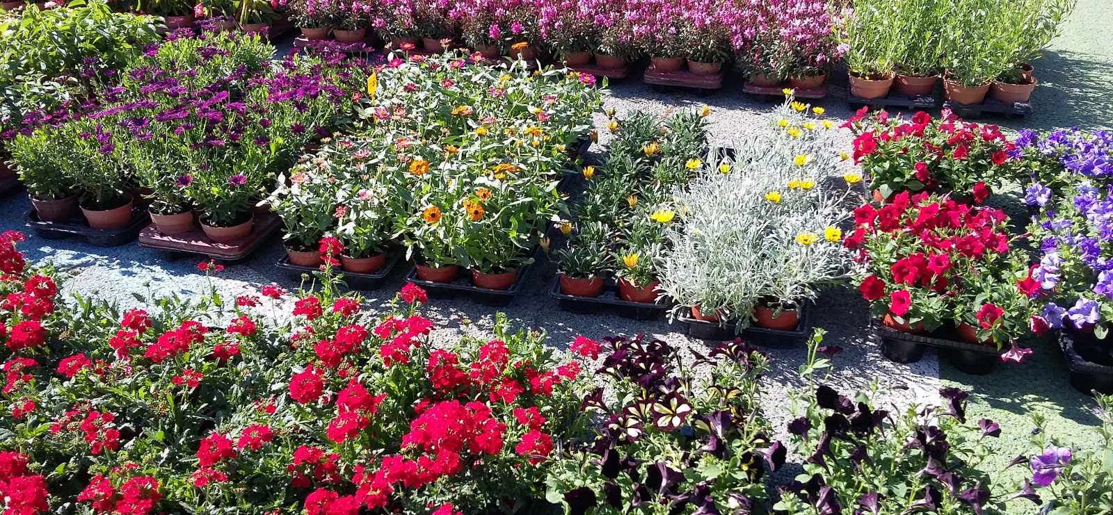 Floralies & Saveurs de nos Terroirs - La Bouverie - Roquebrune-sur-Argens