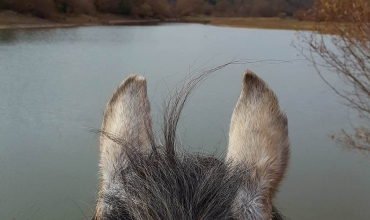 Cheval regardantle lac de St Cassien