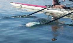 aviron sur le lac de St Cassien