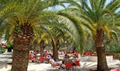 La Palmeraie - Fréjus - sous les palmiers