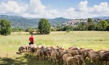 Au cœur des traditions agricoles