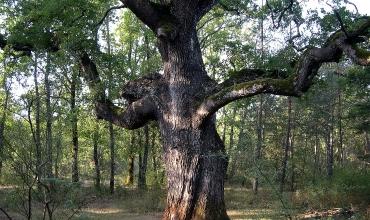 sanctuaire des vieux chênes