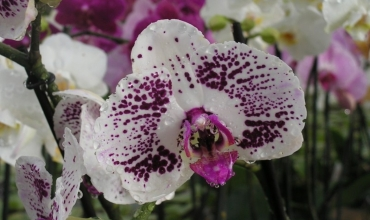 Groupes-Mer-nature-Les_secrets_des_orchidees