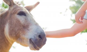 Foire aux ânes