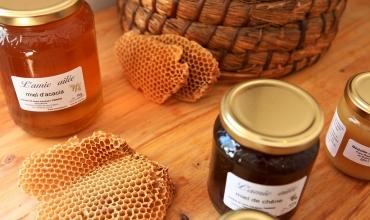 Découverte de l'abeille et des miels de notre région